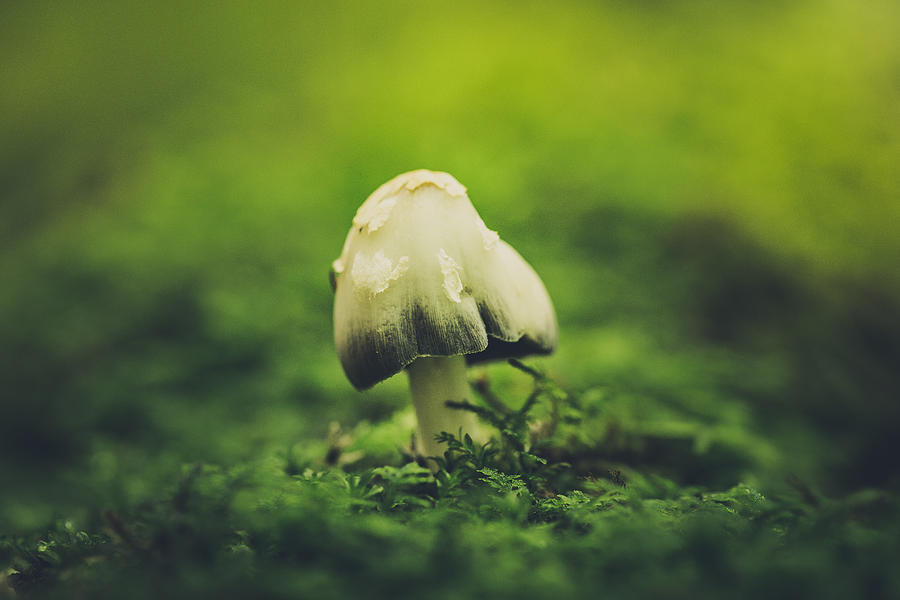 Mushroom Photograph - Deep In The Forest by Shane Holsclaw