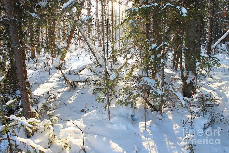 Deep Into The Woods In The Winter ... Photograph