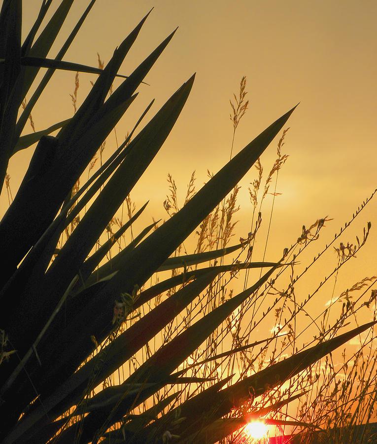 Sunset Photograph - deep July 2 by Dean Uhlinger