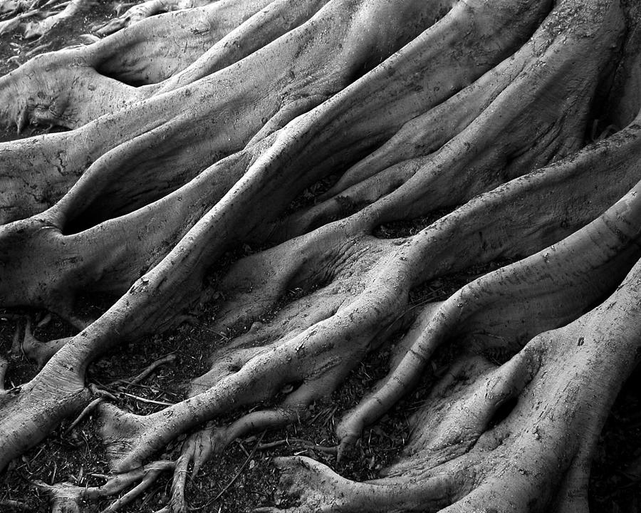 Nature Photograph - Deep Roots by David April