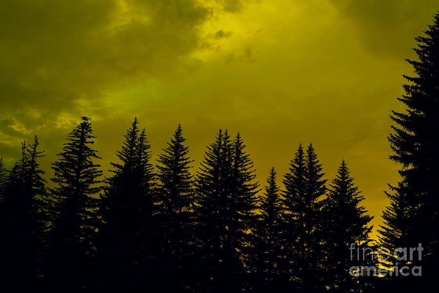 Pine Forest Photograph - Deep Within by Barbara Schultheis