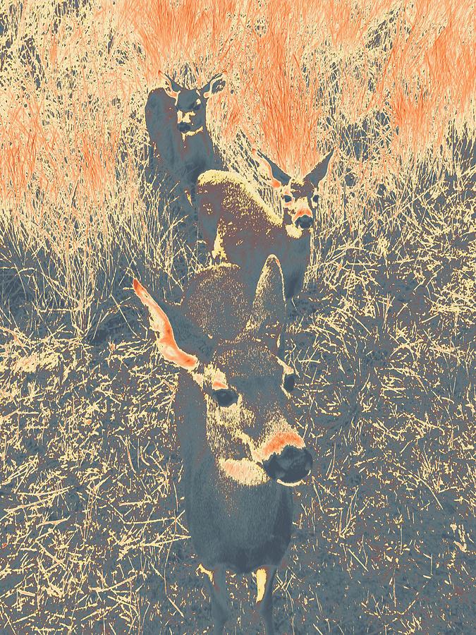 deer #11 by Anne Westlund