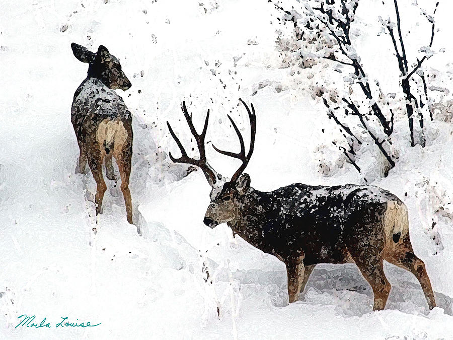 Deer Photograph - Deer And Snow 1 by Marla Louise