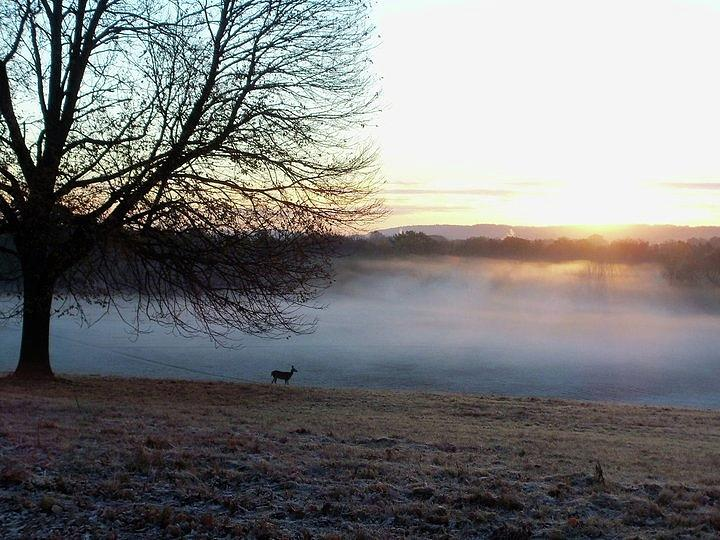 Deer at Dawn by Francis Chester