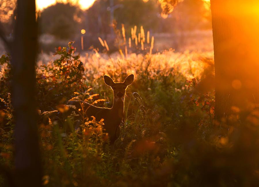Deer At Ojibway Park Photograph