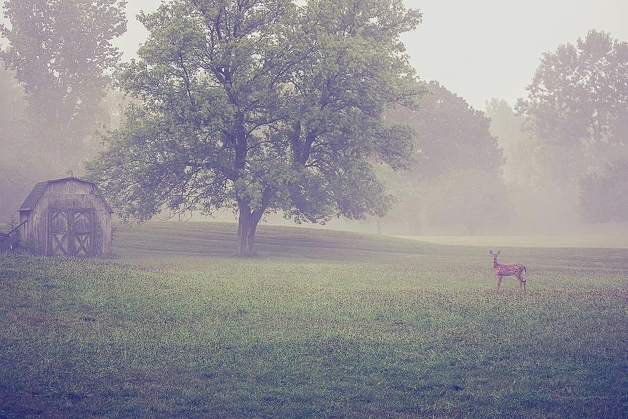 Deer Photograph - Deer by barn on a foggy morning by Maxwell Dziku