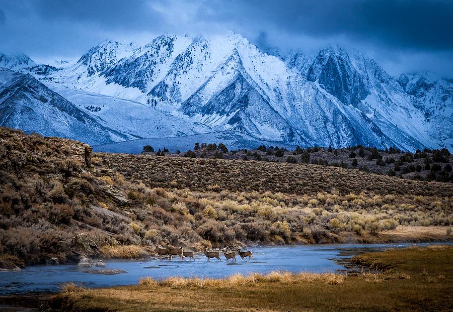 Deer Crossing At Hot Creek Photograph