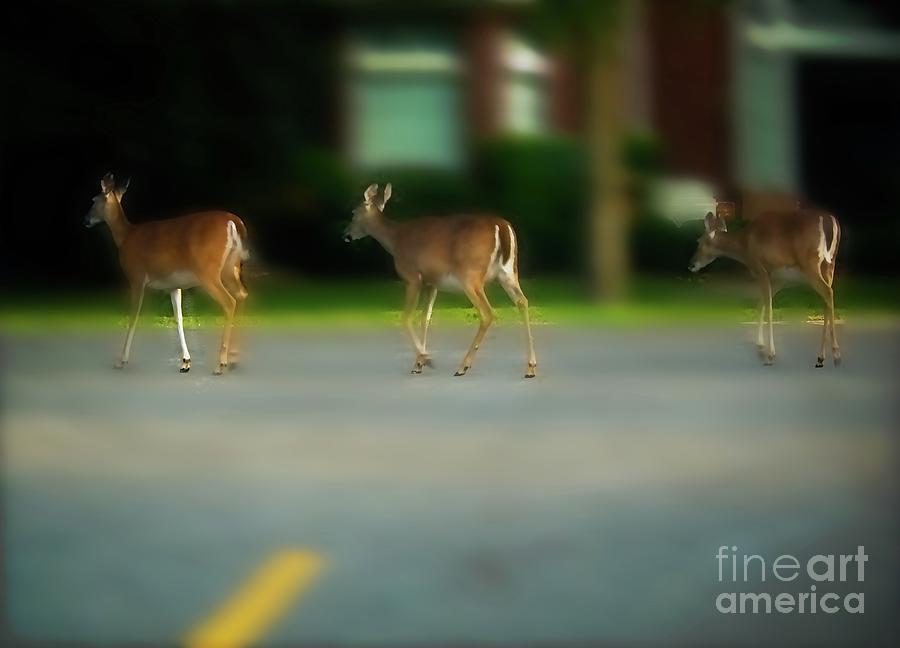 Deer Crossing by JB Thomas