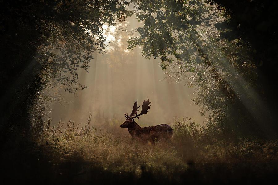 Deer Digital Art - Deer by Dorothy Binder