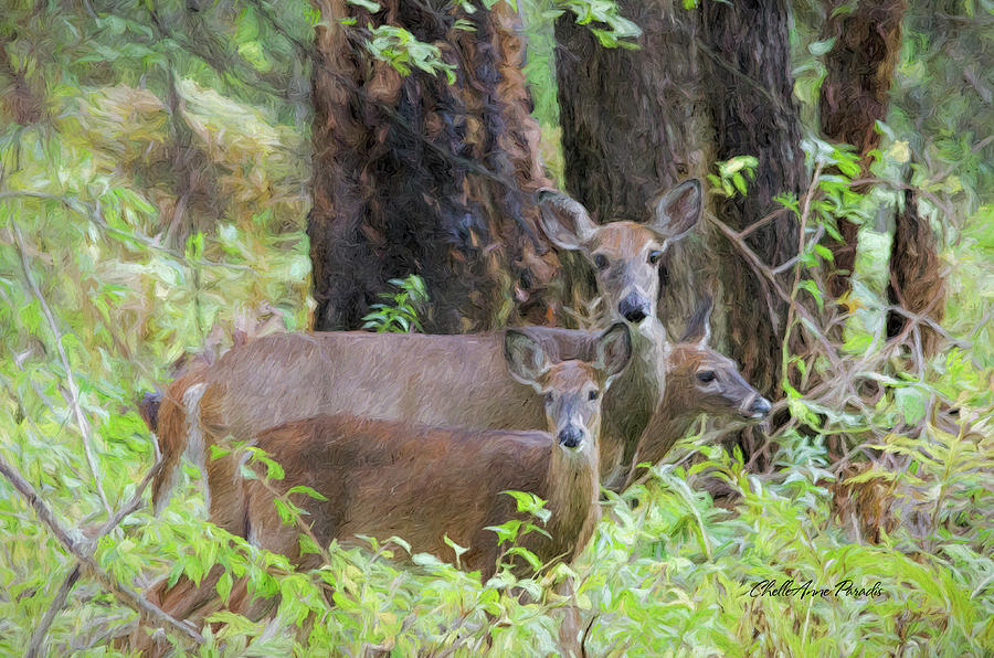 Deer Photograph - Deer Family by ChelleAnne Paradis