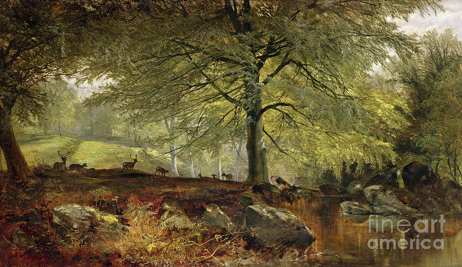 Deer Painting - Deer in a Wood by Joseph Adam