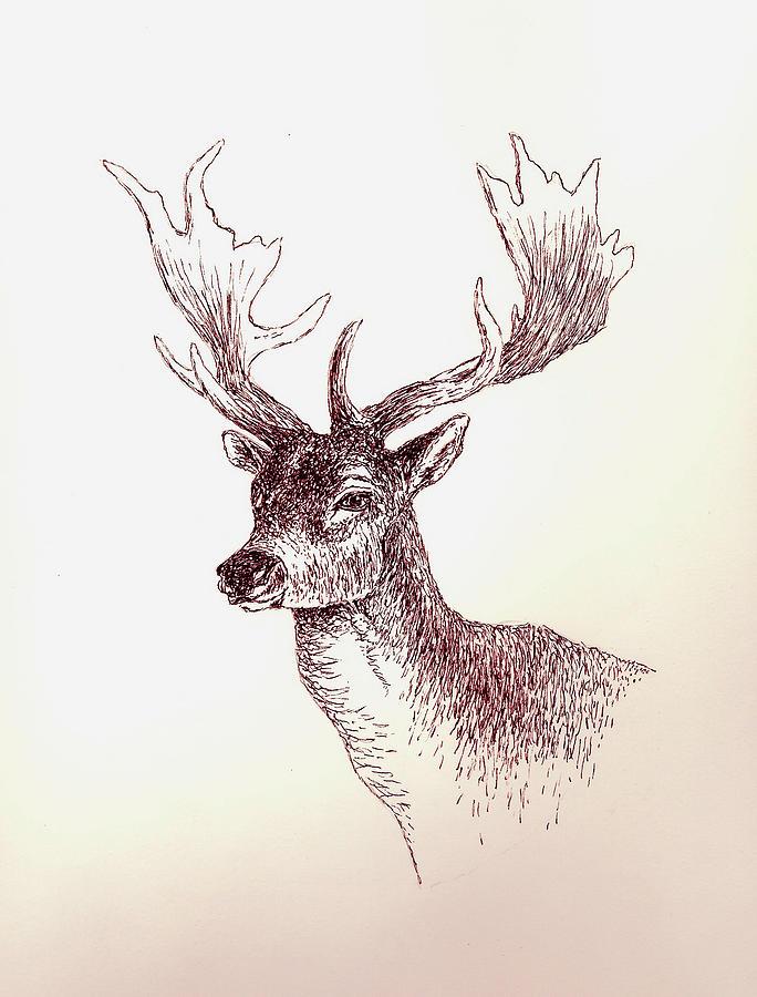 Deer Painting - Deer In Ink by Michael Vigliotti