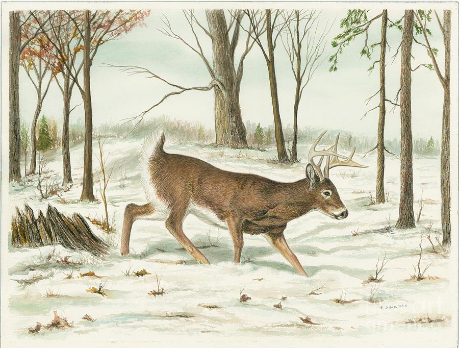 Deer Painting - Deer In Snow by Samuel Showman