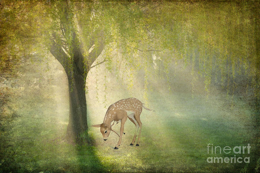 Deer in Sun Rays by Peggy Franz