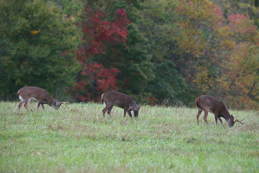 Deer Photograph - Deer In The Fall by James Jones