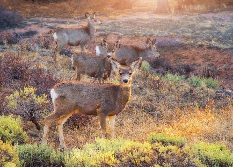 Deer In The Sunlight Photograph