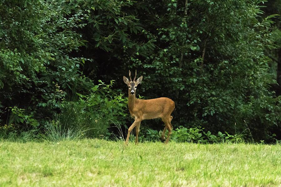 Deer in the woods by Fabrizio Malisan
