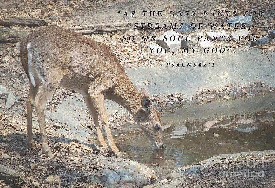 Deer Inspirational Quote Photograph