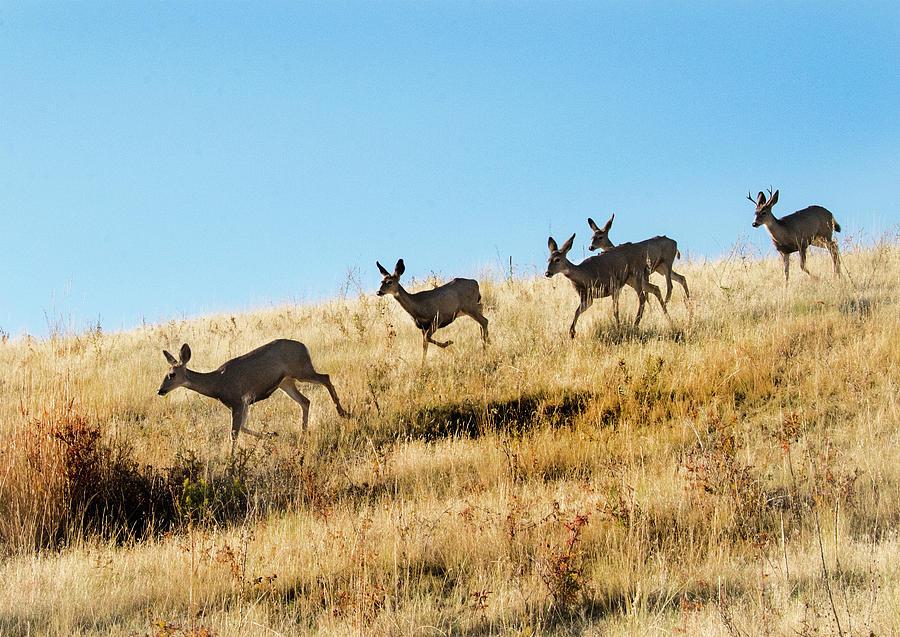 Deer Photograph - Deer on the run by Roy Nierdieck