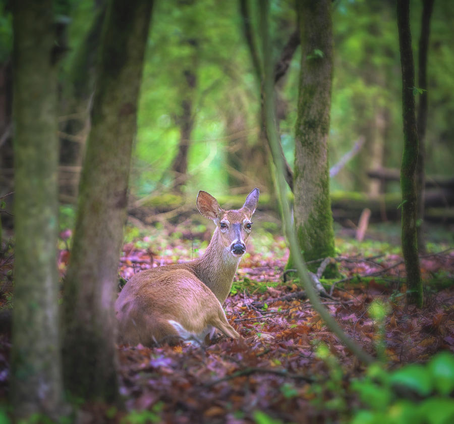 Deer1 Photograph by Craig Applegarth