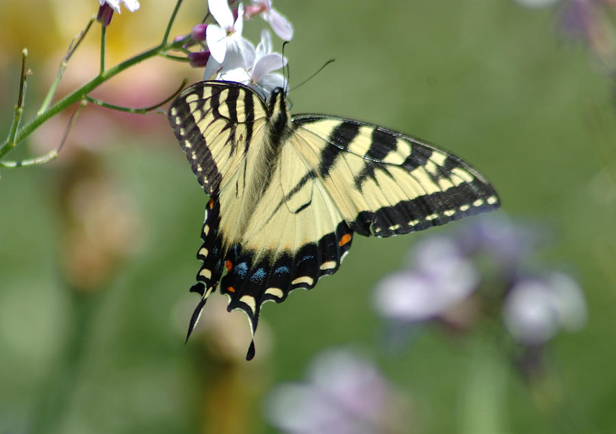 Butterfly Photograph - Delicate Balance by Linda  Murphy