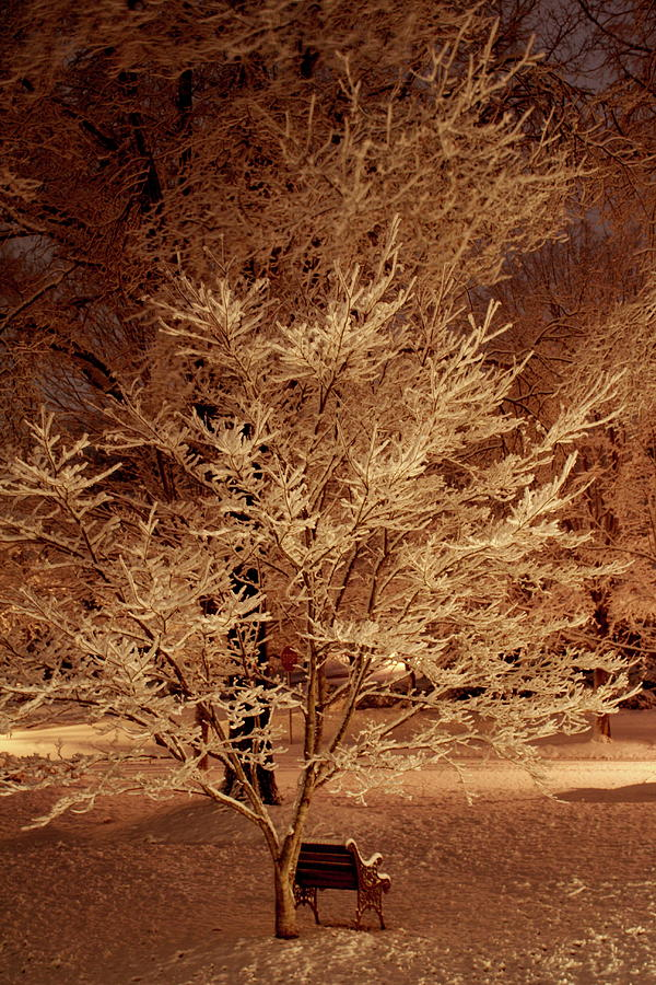 Trees Photograph - Delicate Dusting by Charles Shedd