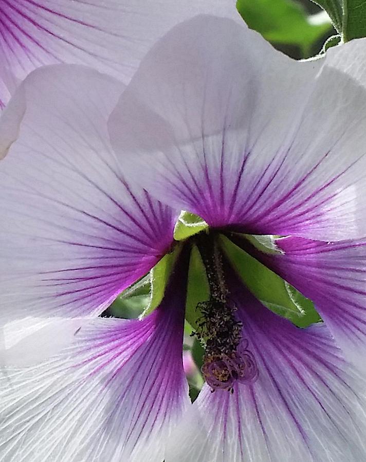 Delicate Flower 2 by Barbara J Blaisdell