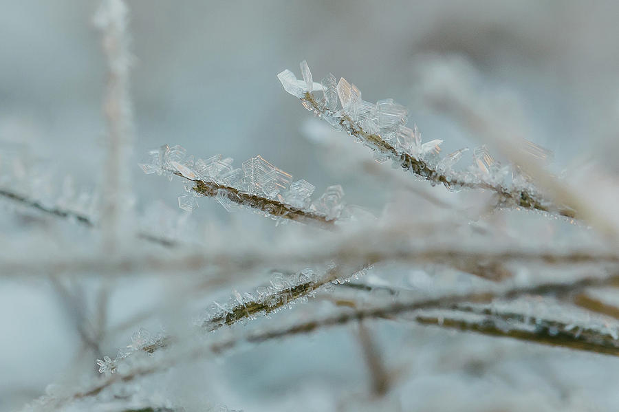 Delicate Morning Frost  by Amber Flowers