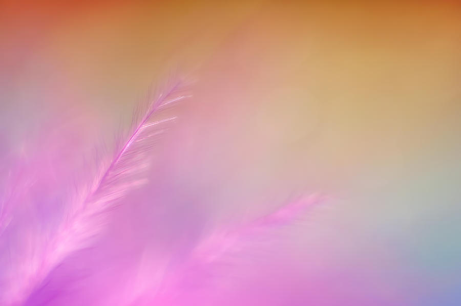 Delicate Pink Feather Photograph