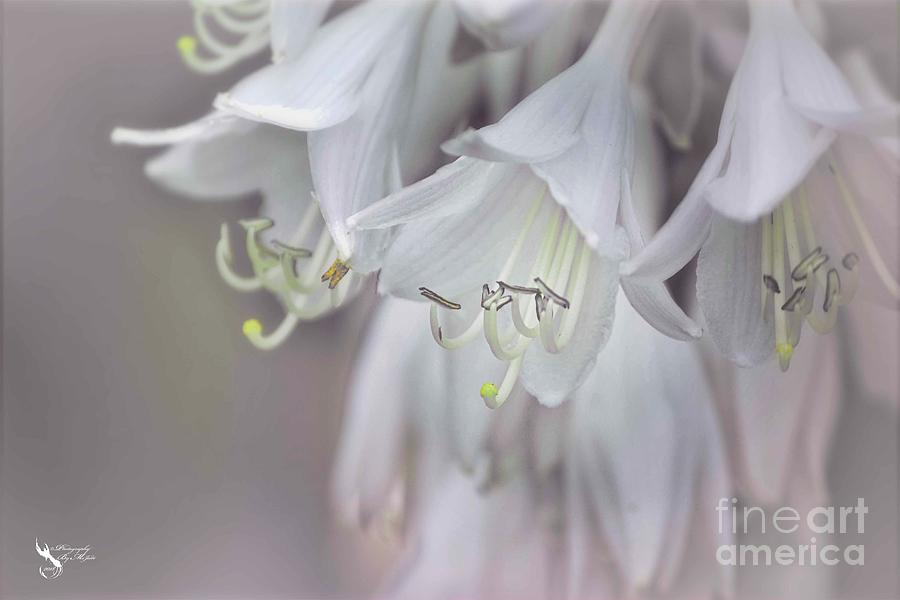 Delicate White Flowers by Ms Judi