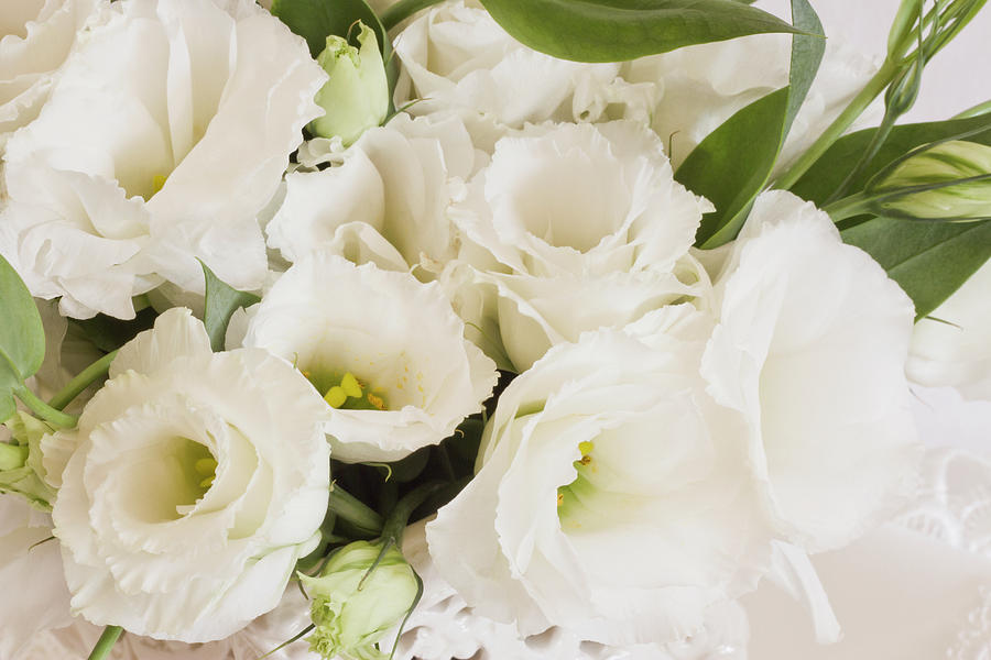 Delicate white lisianthus flowers photograph by sandra foster lisianthus photograph delicate white lisianthus flowers by sandra foster thecheapjerseys Choice Image