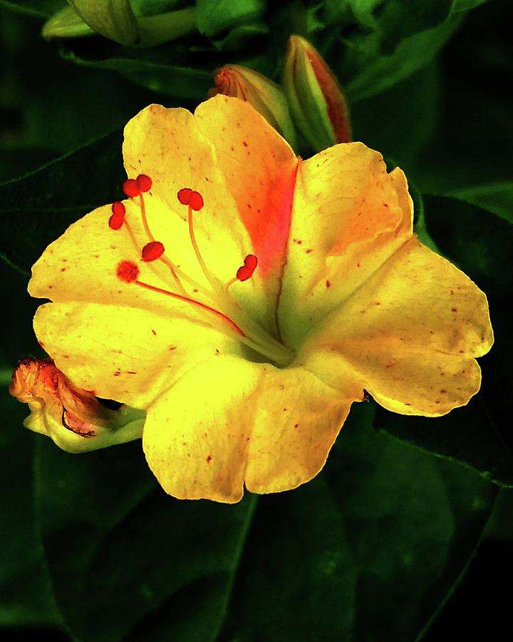 Delicate Yellow Flower by Barbara J Blaisdell