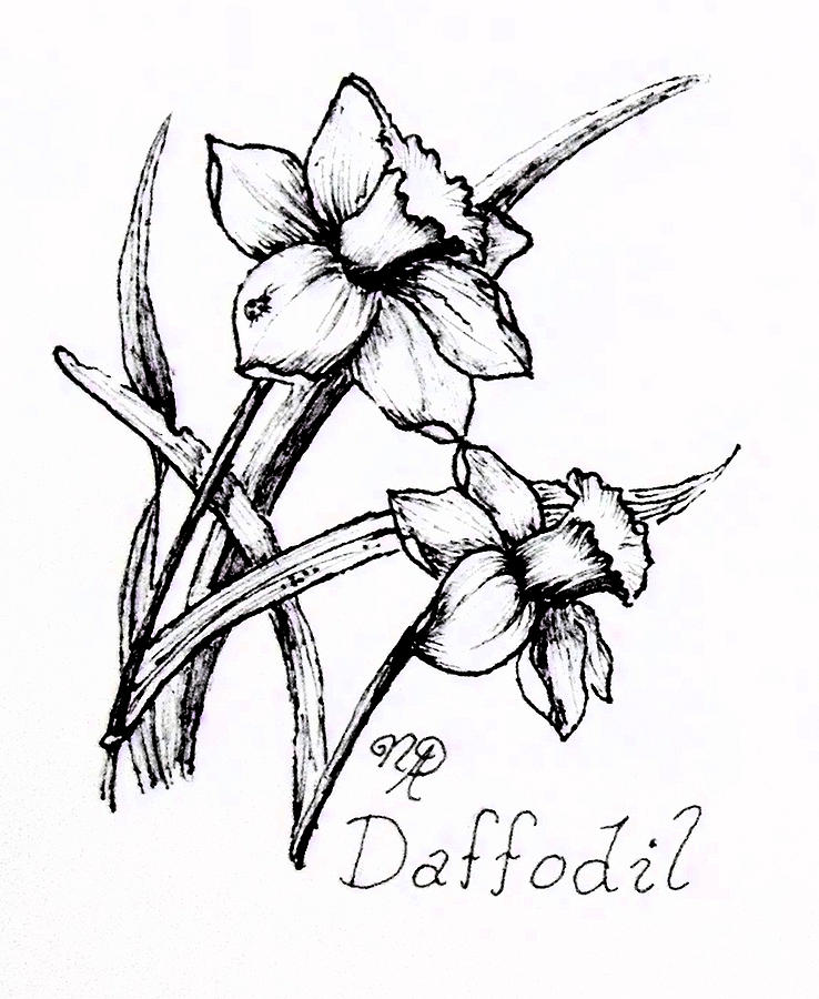 Daffodil Drawing - Delightful Daffodils by Nicole Angell
