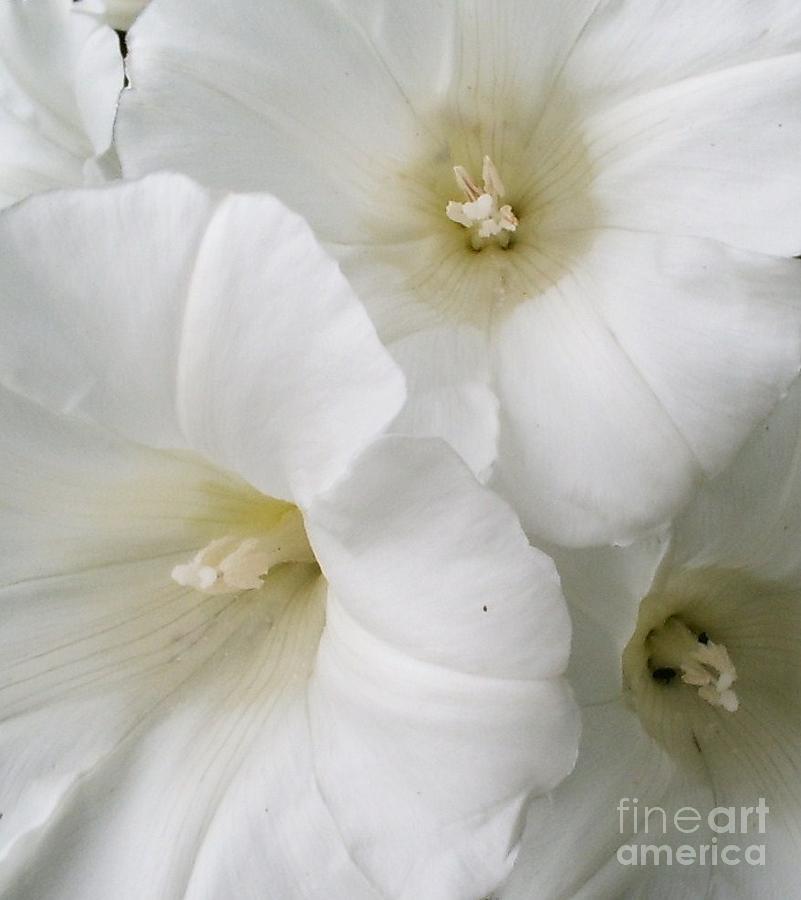 White Photograph - Delightful White by Deborah Brewer