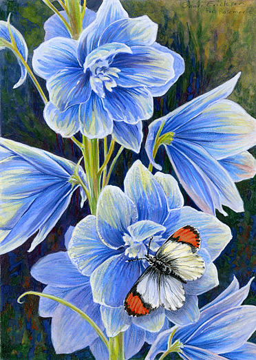 Flower Painting - Delphinium And Sara Orange Tip by Shari Erickson