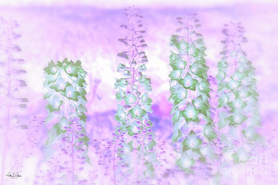 Delphiniums Photograph by Heather Hubbard