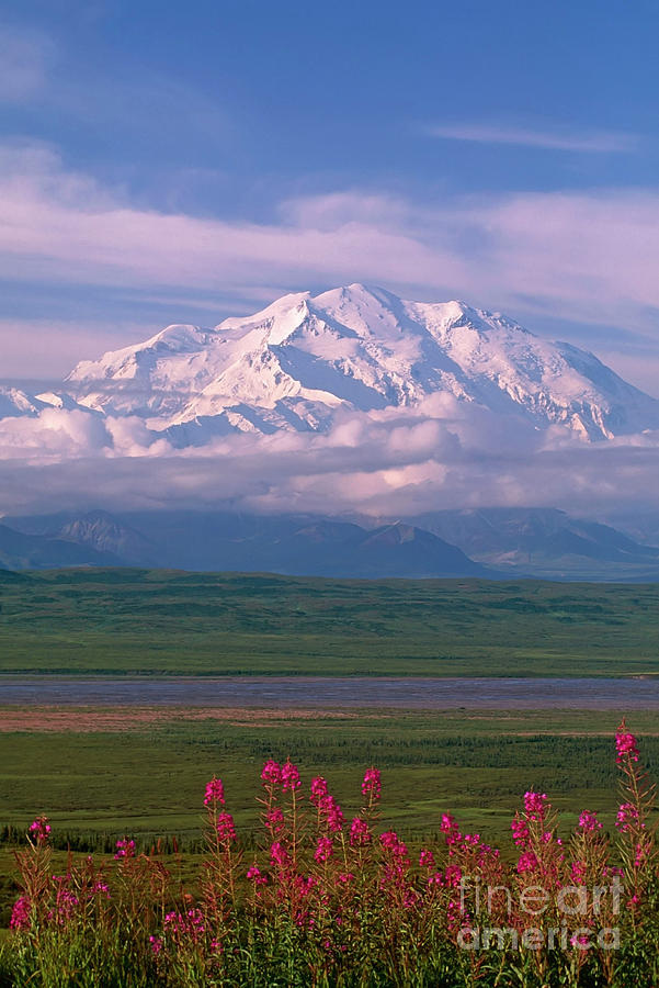 Denali and Fireweed by Cliff Riedinger