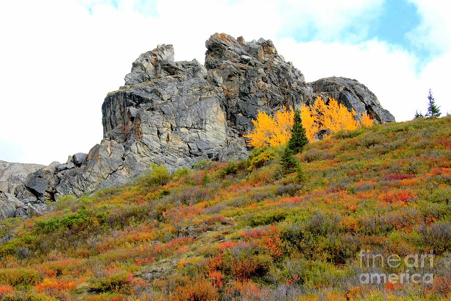 Rock Photograph - Denali outcropping by Frank Townsley