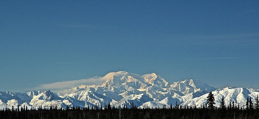Denali Panorama by Donna Quante