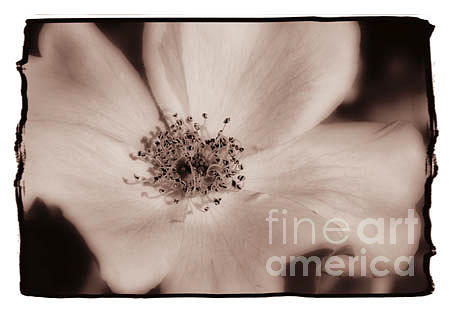Flower Photograph - Descanso Gardens 7 by K Randall Wilcox
