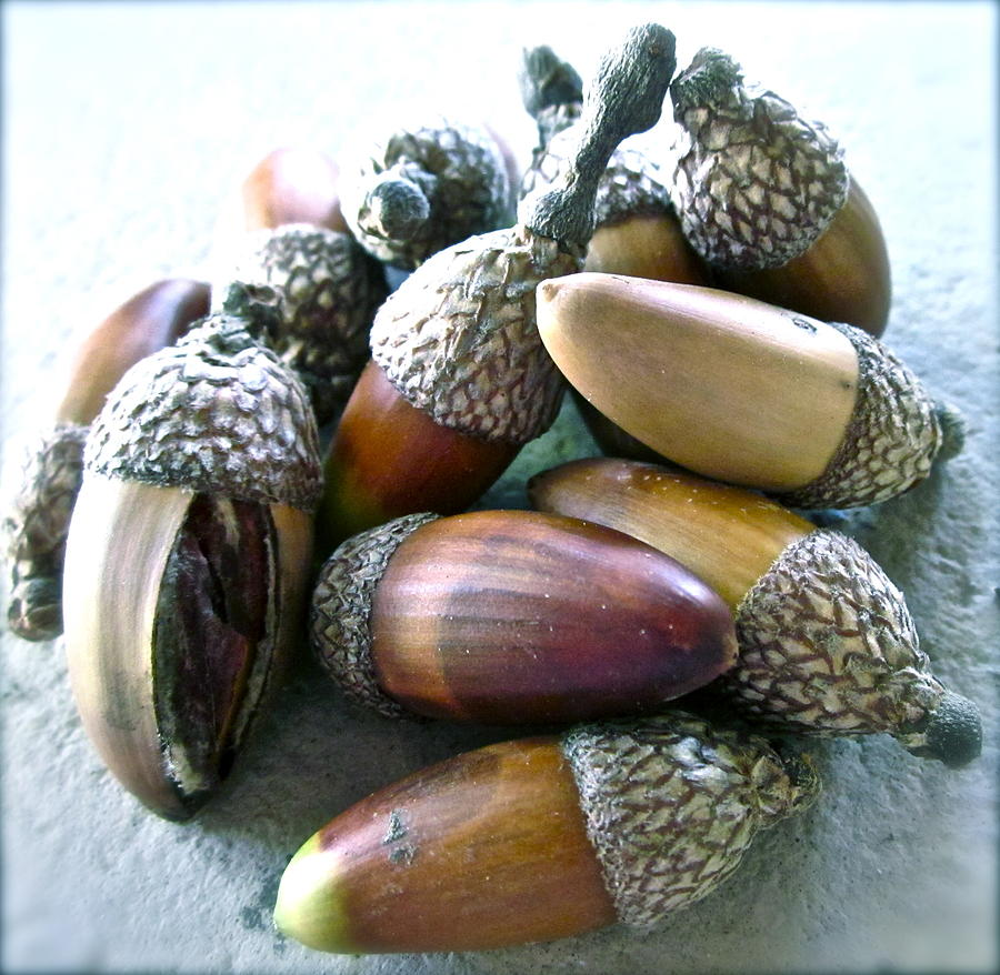 Seed Photograph - Descendants by Gwyn Newcombe