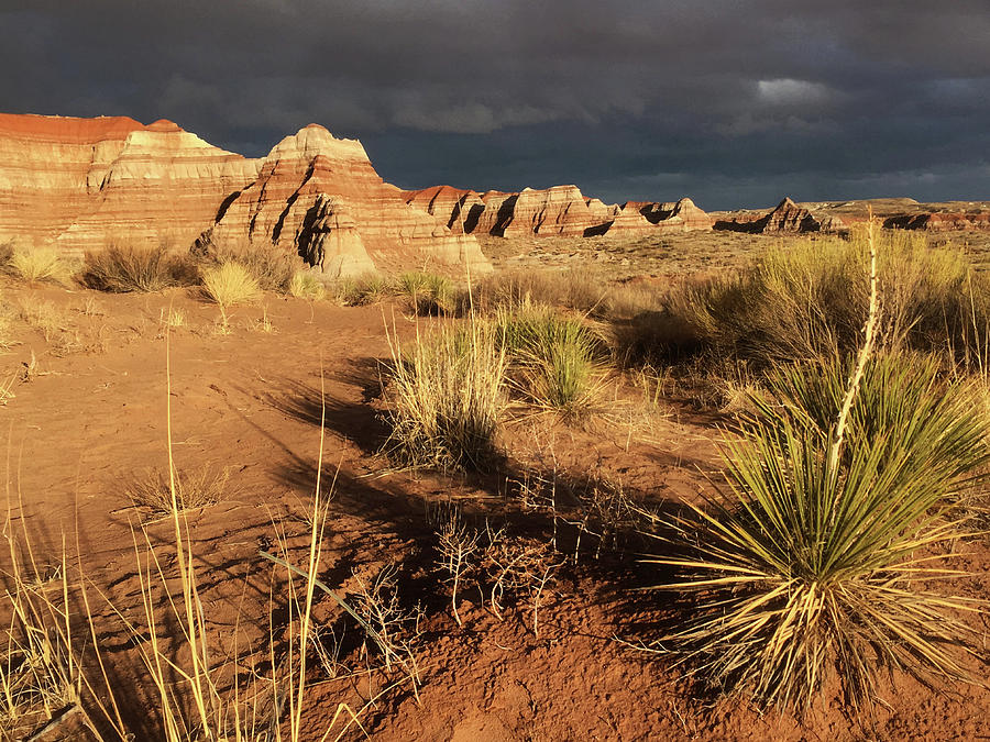 Desert Beauty by Carol Milisen