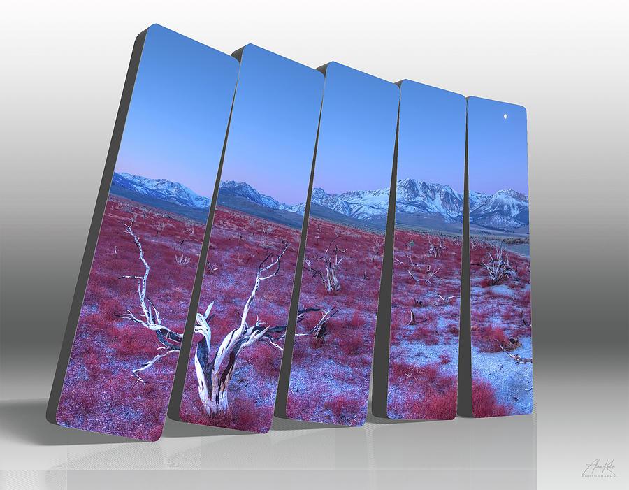 Desert Beauty Dominos Photograph