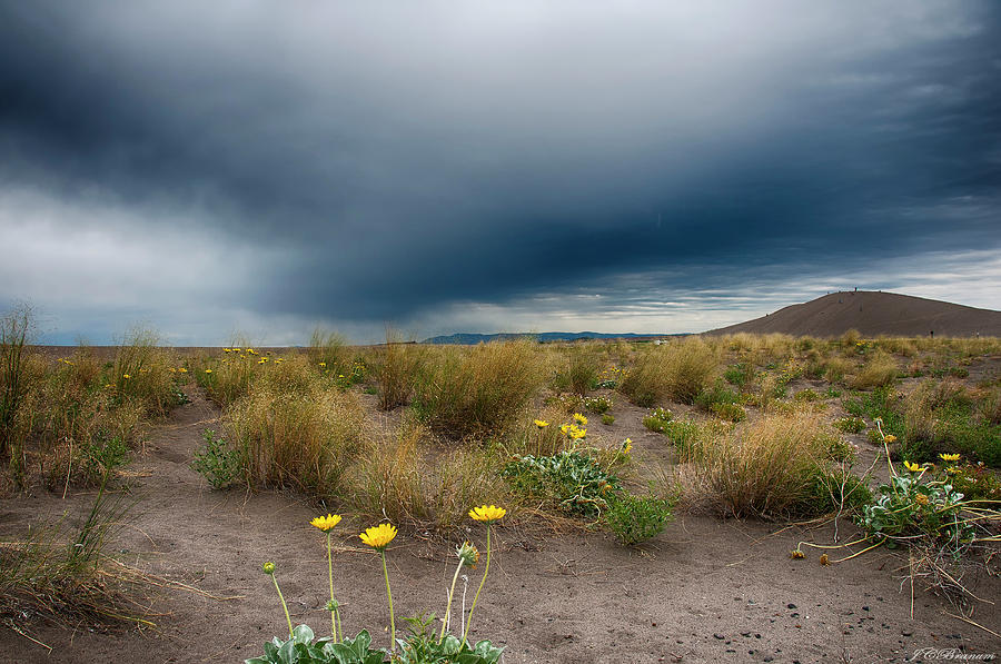 Desert Bloom Photograph by Jason Branum