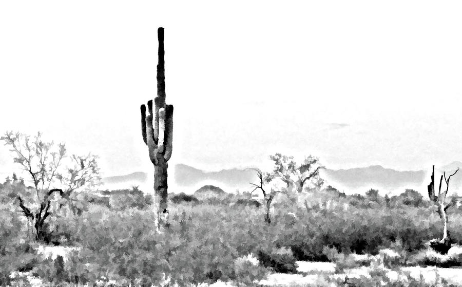 Desert Cactus Photograph