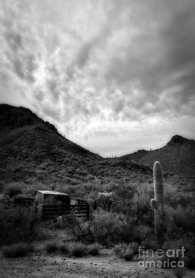 Desert Corral by Lee Craig