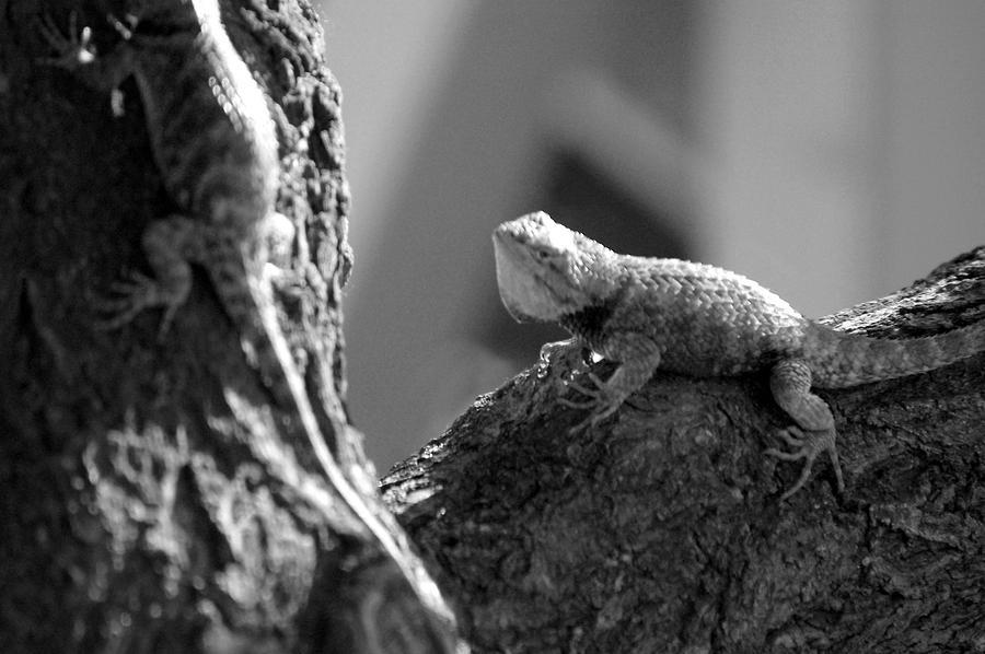 Nature Photograph - Desert Creatures by Debbie Mount