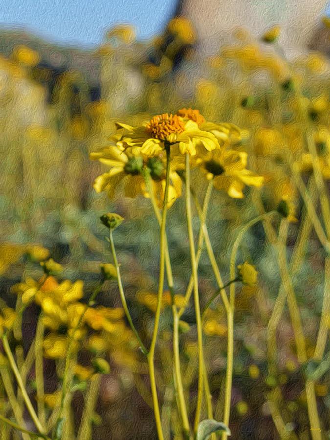 Impressionistic Digital Art - Desert Flower Impressions One - Wild Sunflowers by Glenn McCarthy Art and Photography