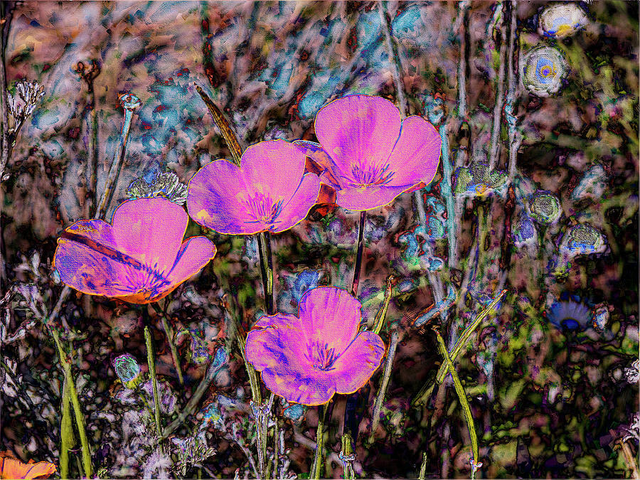 Desert flowers abstract photograph by penny lisowski flowers photograph desert flowers abstract by penny lisowski mightylinksfo