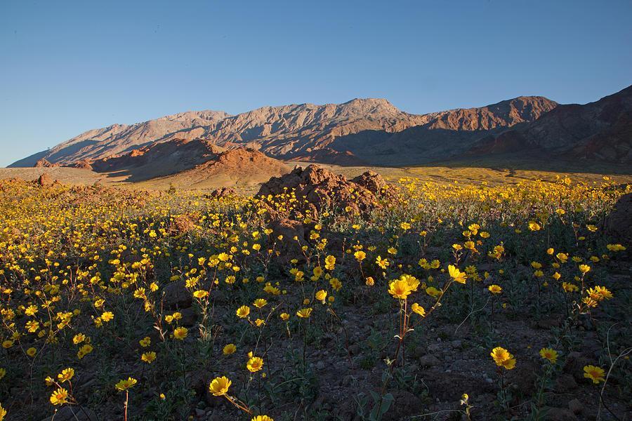 Desert Gold on Badwater Road by Susan Rovira